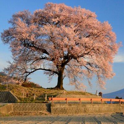 2018/5/20 今夕の富士山  夕焼けしたら綺麗そうな雲に誘われて…中野の棚田へ行きましたが、残念〜そのまんま日暮れとなりました。  最後まで水が入っていなかった田(右 画角外)も満水となり、すべての田圃に水が入りました。… https://t.co/XCDN4qdVLK