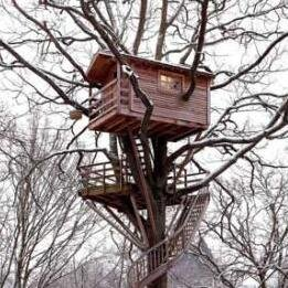 Bakers old Treehouse