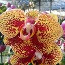 Orchids Paradise  (@230d0327f01e44b) Twitter