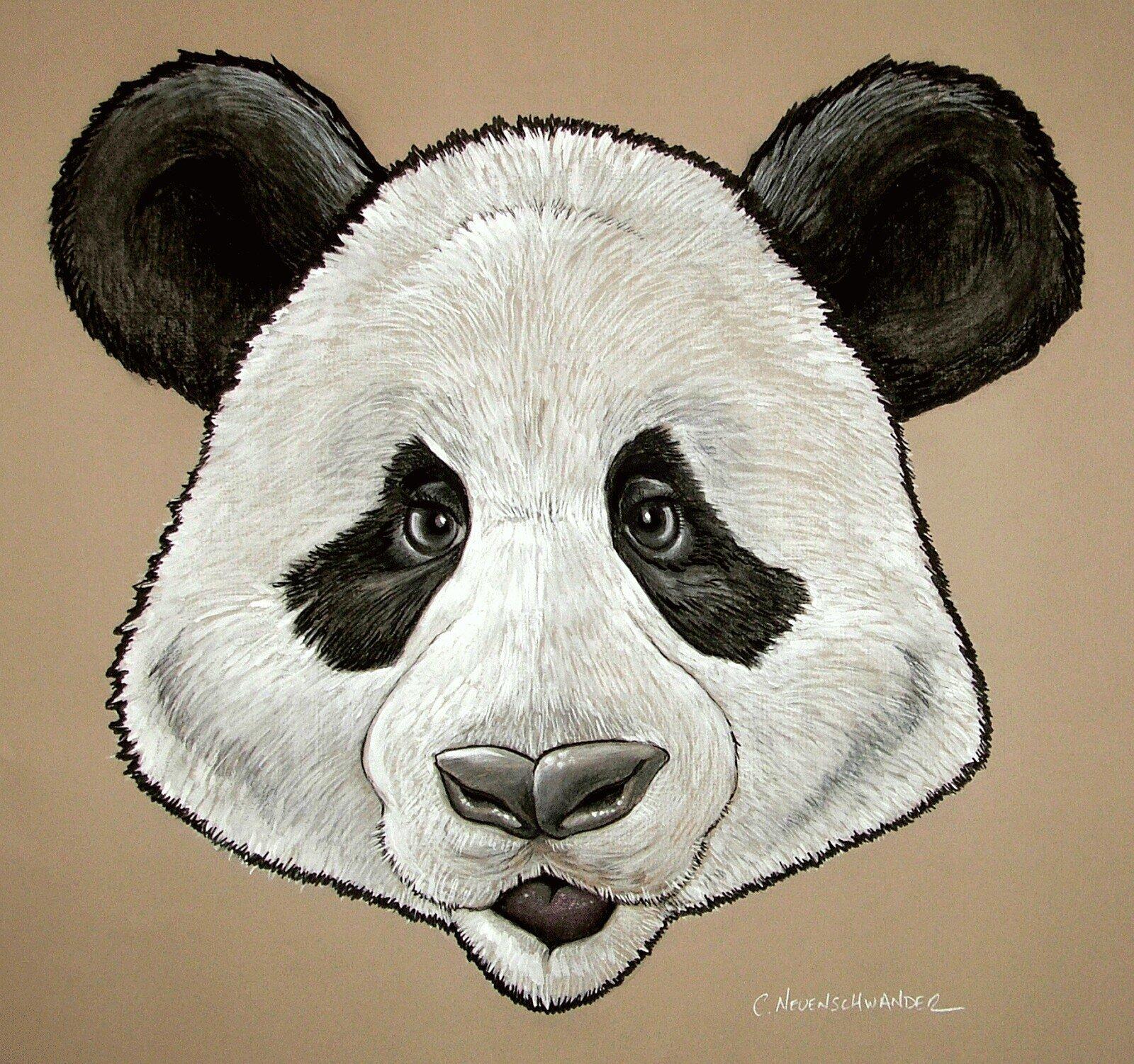 панда морда картинка могут сопровождаться трогательными