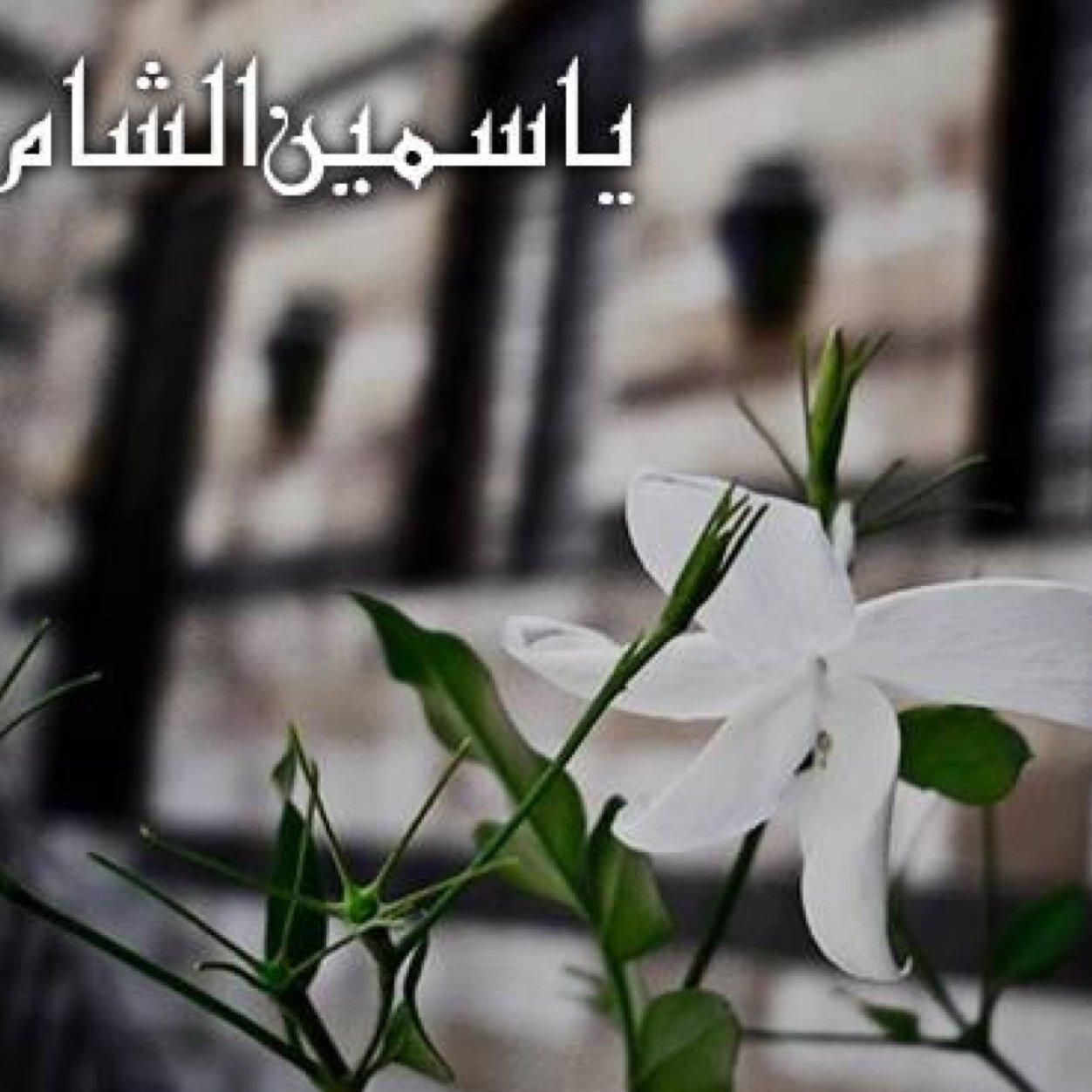Image result for صور ياسمين الشام