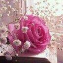 Amal Alahmadi (@00b683da7a0f43e) Twitter