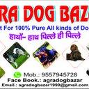 Agra DogBazar (@09557945728) Twitter