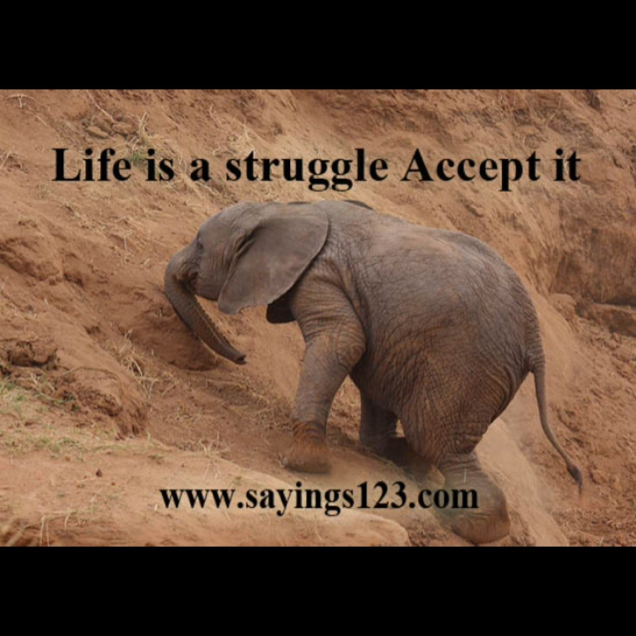 the struggles in life Life is hard it is a struggle sometimes i just made it through a very difficult  season at work during that time, i was working my 40+ hours in the.