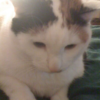 Kitties4Every1 (@Kitties4every1) Twitter profile photo