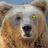 クマペガbot's Twitter avatar