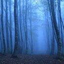misty forest (@0131kurogane) Twitter