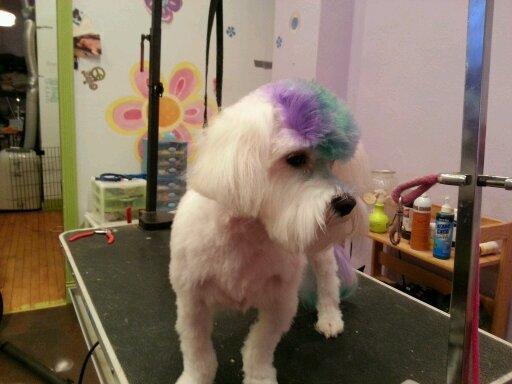 Dog Grooming Shaker Heights Ohio