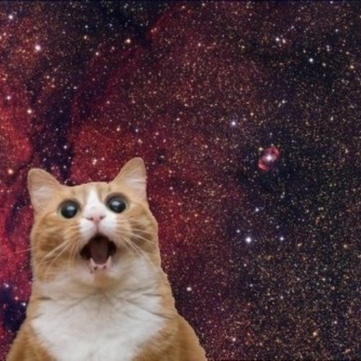 cat space pics catspacepics