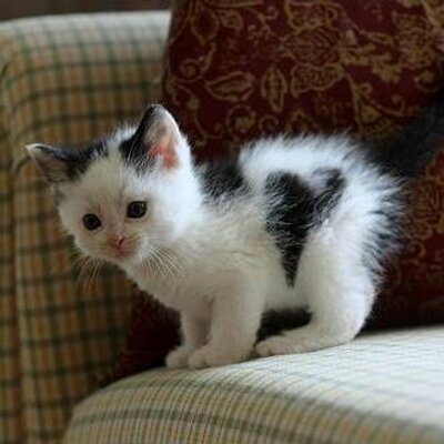 modern cat litter furniture