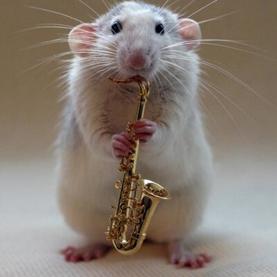 Image result for cute rat