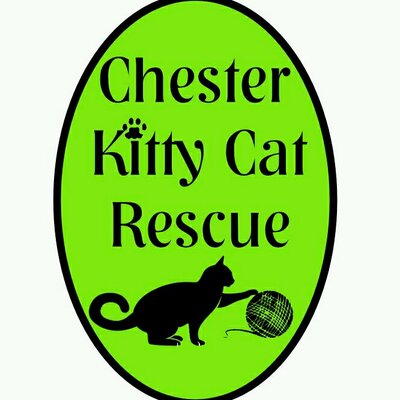 Chester Kitty Cat Rescue