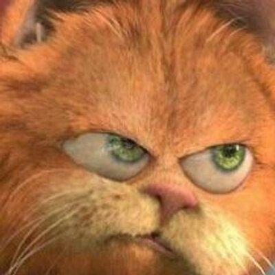 Кот Мотя
