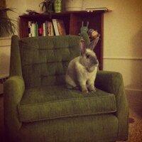 Adoptable Buns 🐰🐇 (@AdoptableBuns) Twitter profile photo