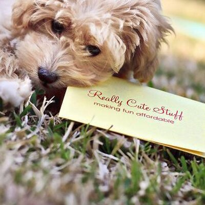Really Cute Stuff | Social Profile