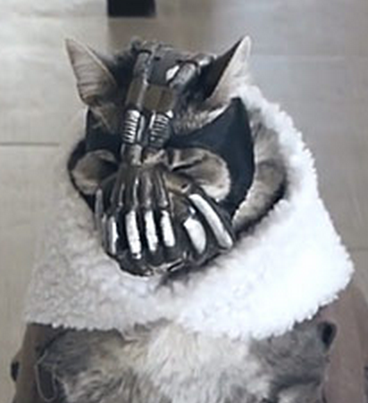 Image result for bane cat