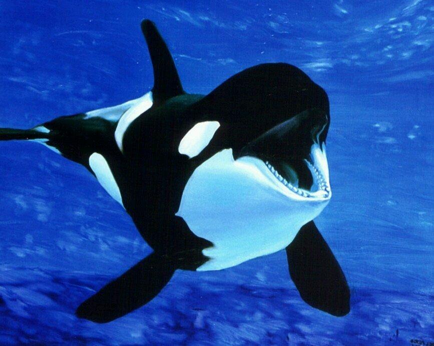 Скачать торрент кит убийца