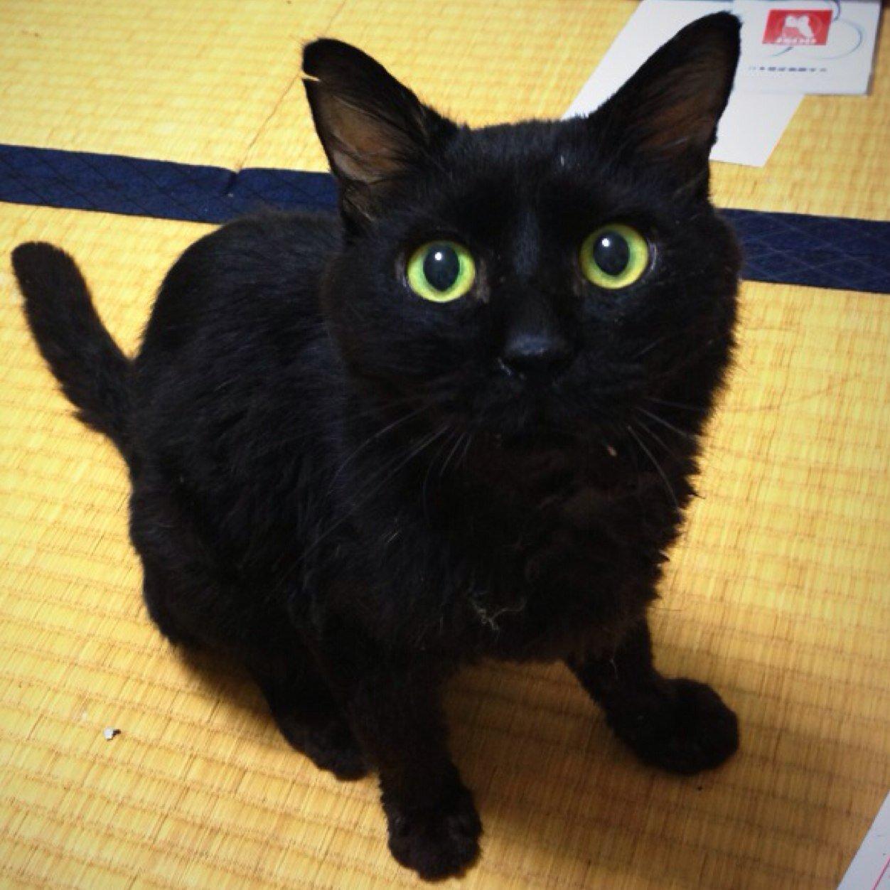 【黒ウィズ】[黒猫暗黒期]エヴァコラボの思い出。 …