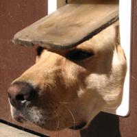 Dog Solution