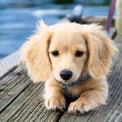 Cutest Baby Animals SoCuteOverloads