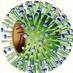 Flu H1N1 H5N1