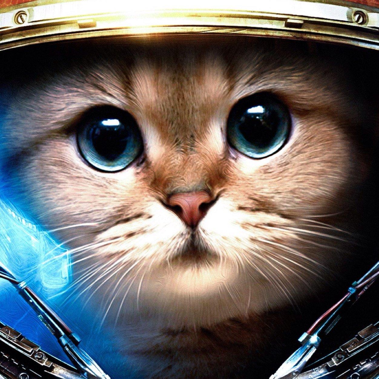 Mr Cool Cat Mrcoolcat911 Twitter