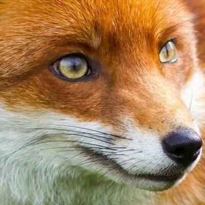 Ian rafferty fox news