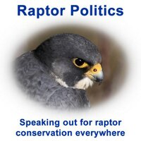 Raptor Politics | Social Profile