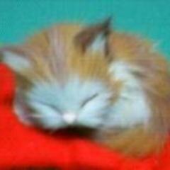 夢見る眠り猫のアイコン