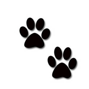 Dog Adoptions Romani