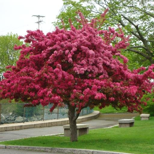Prescott park prescottparknh twitter for Arboles de jardin de hoja perenne