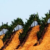 Winecations | Social Profile
