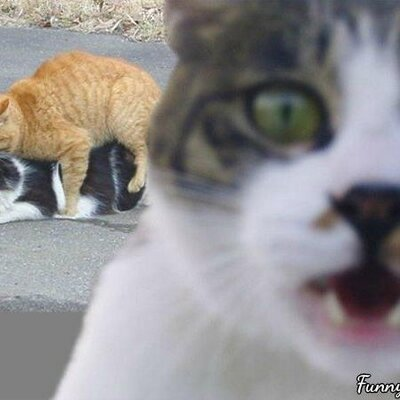Funny cat pictures Twitter Funny Cat Pics Twitter Funny Cat Pics funnycatdotpics Twitter