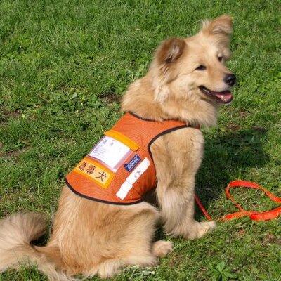 (公式)公益社団法人 日本聴導犬推進協会 @hearingdogjp