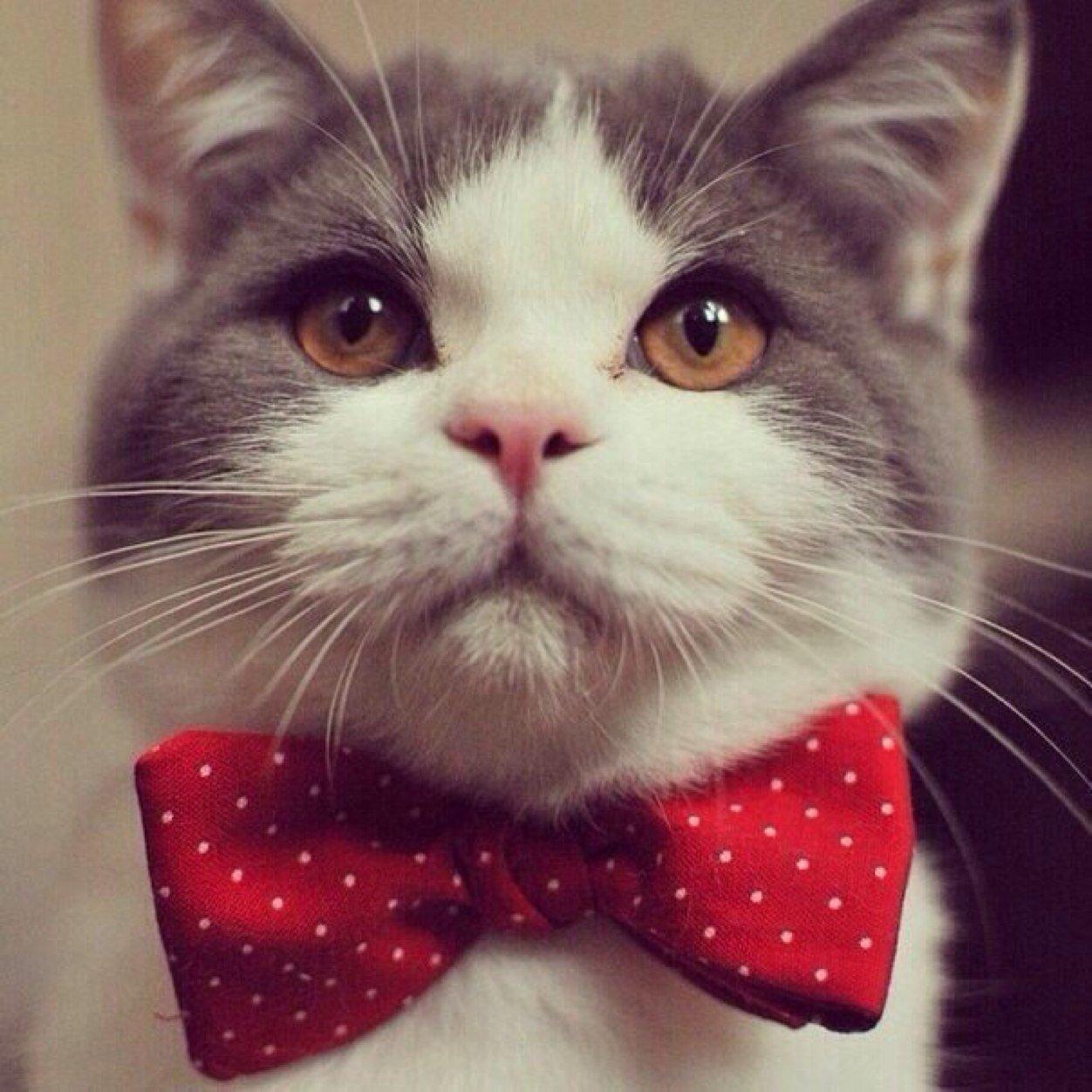 картинка кошка с бантиком на голове