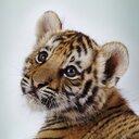 ❤  Baby Animals ❤