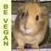 @VeganWheekers