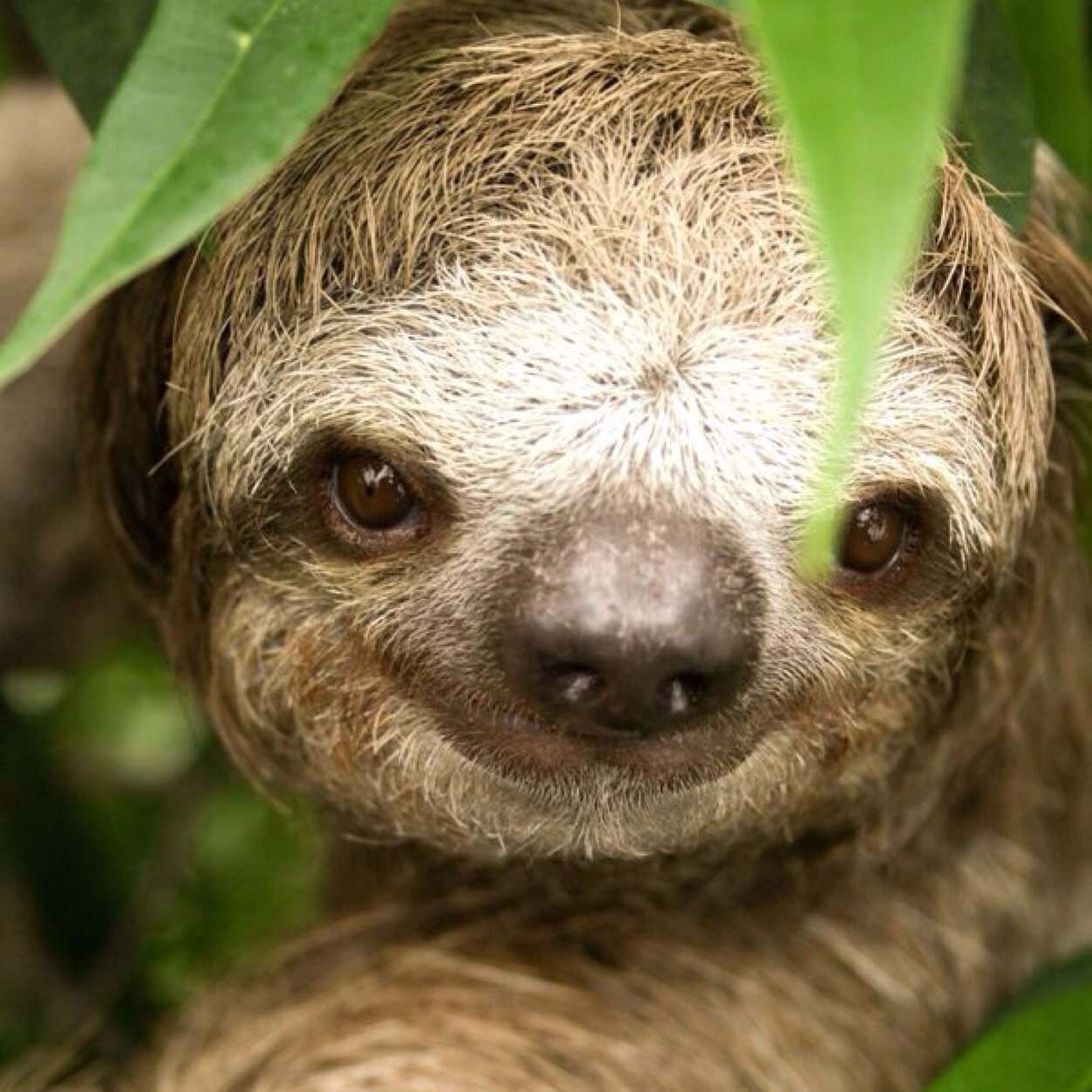 Rape sloth original - photo#35