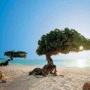 Aruba News Tweets