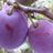 IYG Fruit & Veg