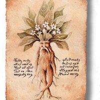 Sir Autumn Mandrake