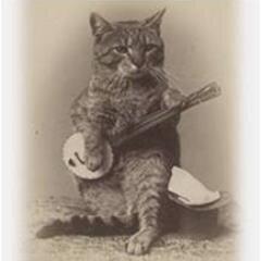 The Shabbycats