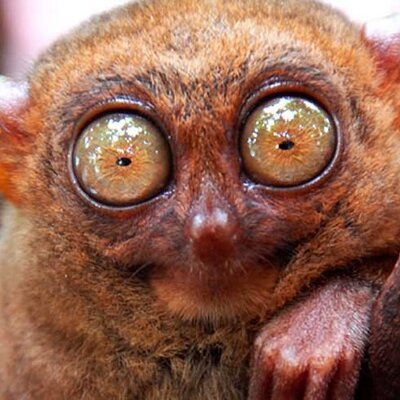 ugly animals fat ass animal funny eyes weird looking creatures monkey face eye ugliest monkeys tarsier profile crazy hi pretty