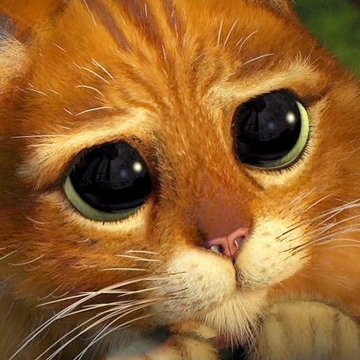 Открытки спокойной, гифка кота из шрека с грустными глазами