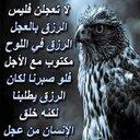 علي داود (@6512c2540fc9484) Twitter
