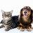 1#PET LOVERS