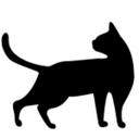 cats26 (@0piu3) Twitter