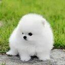 ลูกหมาสีขาว (@0310Aan) Twitter