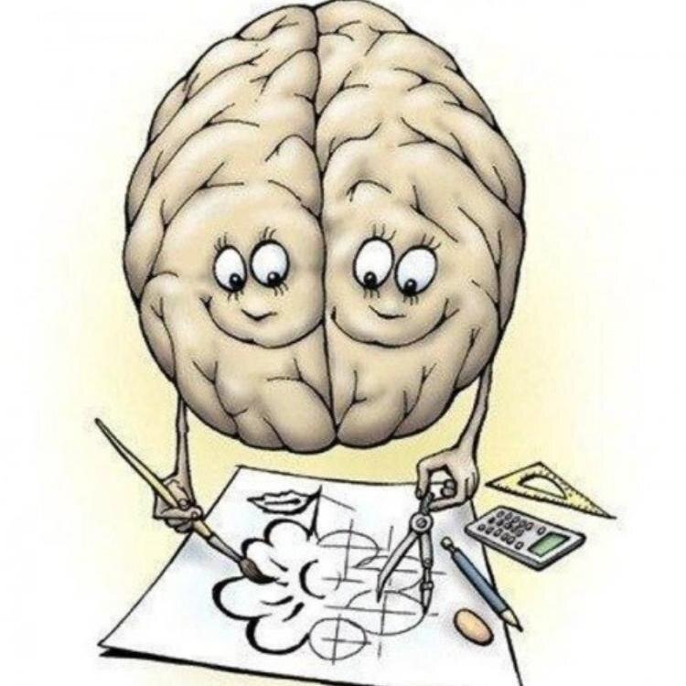 Мозг головной