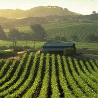 Napa Valley Insights | Social Profile